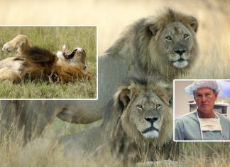 cecil the lion and brother jericho