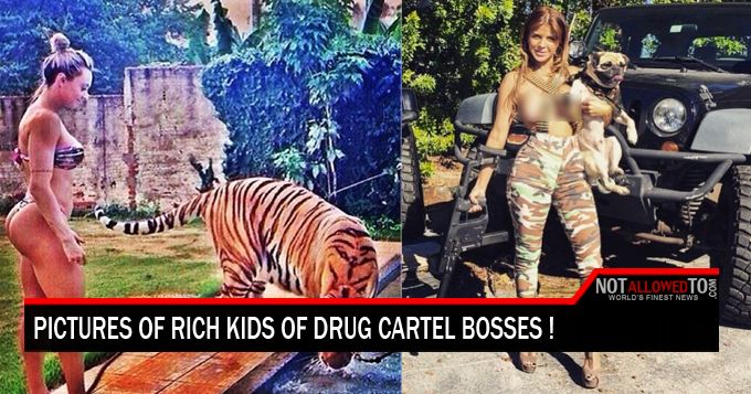 how to join the drug cartel