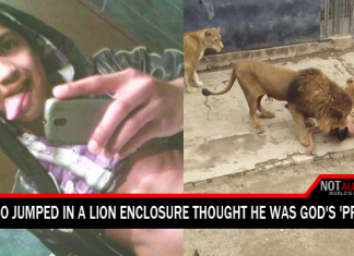 man jumped in lion pit