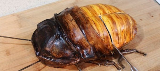 Man Cuts Open Giant Cockroach What's Inside Is Shocking